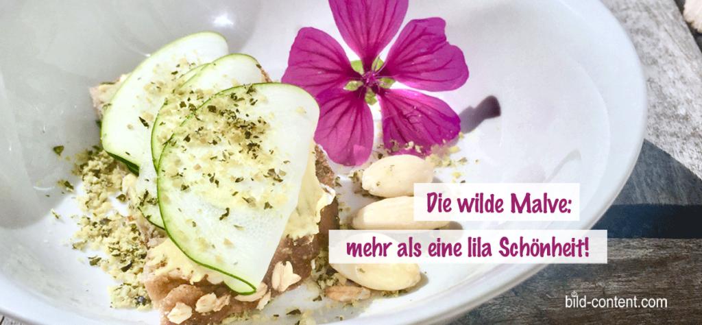 Wilde Malve; lila Blüte