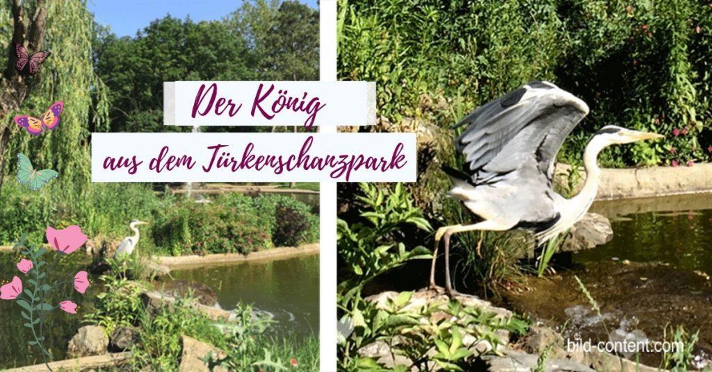 Reier im Türkenschanzpark / ©a.eishofer