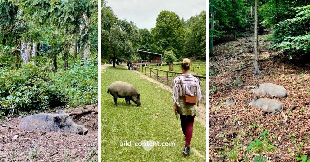 Naturpark Sparbach. Fotos: bild-content/ ©astrid.eishofer