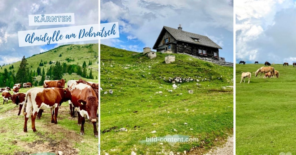 Kühe auf der Alm am Dobratsch in Kärnten