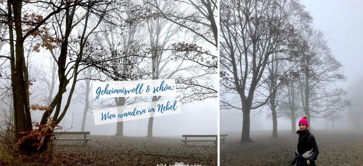 Mystische Nebelwanderung im Wienerwald