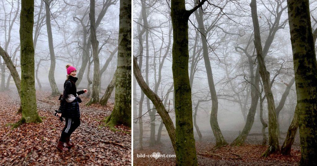 ©Astrid Eishofer Wandern in Wien Ottakring, Nebelstimmung im Wald