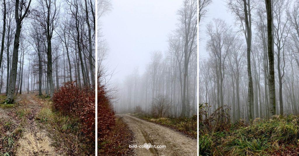 Nebel im Wienerwald