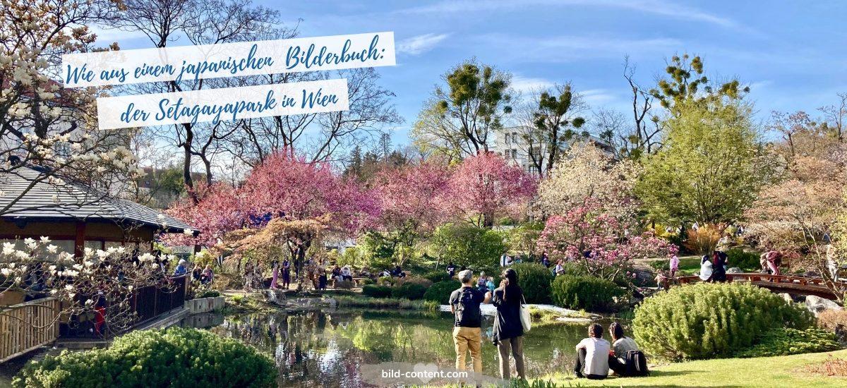 Setagayapark Wien  – Kirschblüte im japanischen Garten
