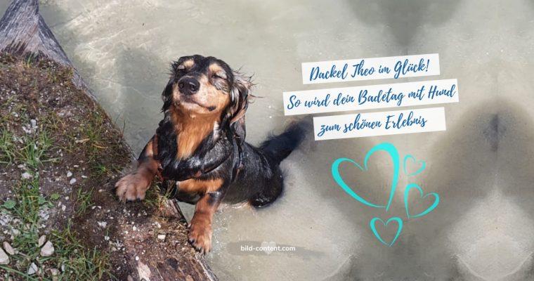Schwimmen mit Hund – was müssen Hundehalter beachten?